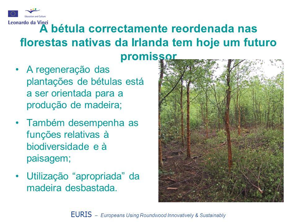 A bétula correctamente reordenada nas florestas nativas da Irlanda tem hoje um futuro promissor A regeneração das plantações de bétulas está a ser orientada para a produção de madeira; Também desempenha as funções relativas à biodiversidade e à paisagem; Utilização apropriada da madeira desbastada.