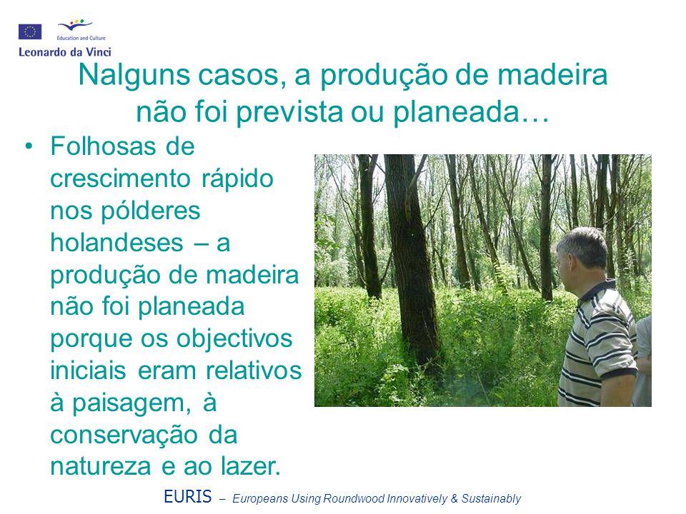 Nalguns casos, a produção de madeira não foi prevista ou planeada… Folhosas de crescimento rápido nos pólderes holandeses – a produção de madeira não foi planeada porque os objectivos iniciais eram relativos à paisagem, à conservação da natureza e ao lazer.