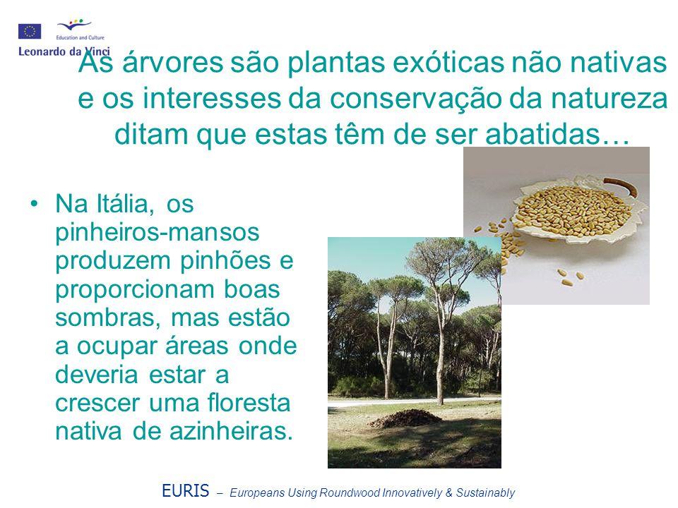 EURIS – Europeans Using Roundwood Innovatively & Sustainably As árvores são plantas exóticas não nativas e os interesses da conservação da natureza di