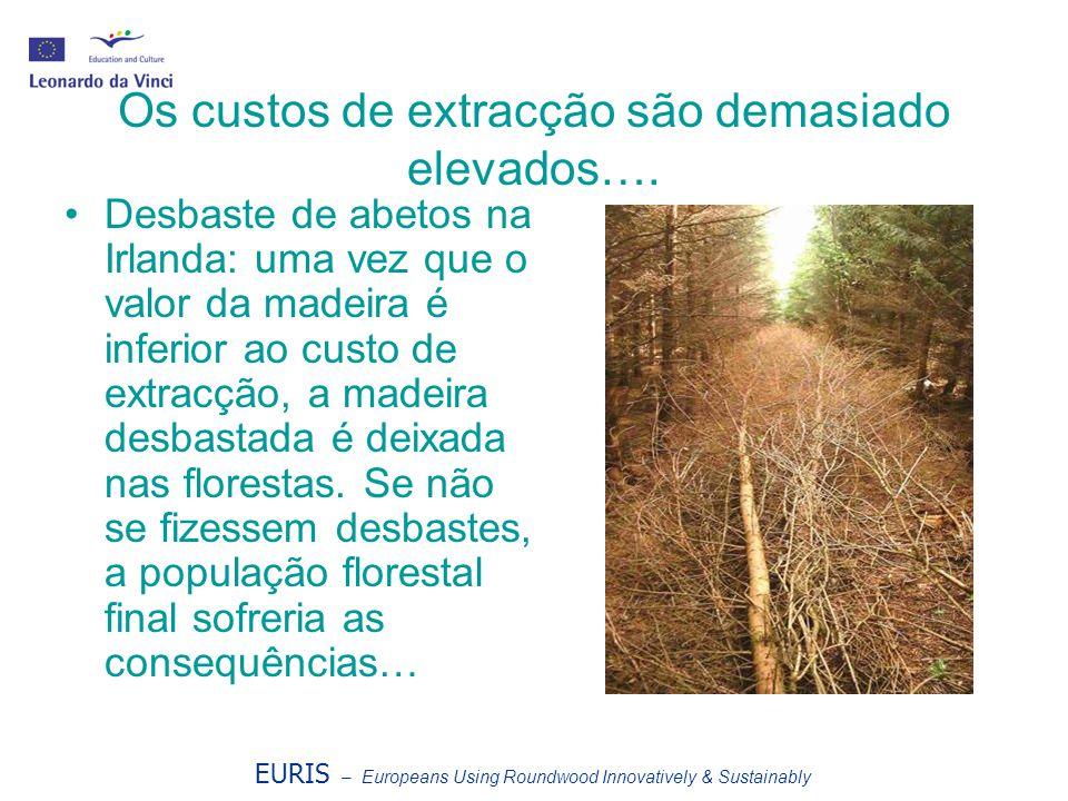 EURIS – Europeans Using Roundwood Innovatively & Sustainably Os custos de extracção são demasiado elevados…. Desbaste de abetos na Irlanda: uma vez qu