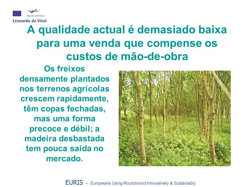 A qualidade actual é demasiado baixa para uma venda que compense os custos de mão-de-obra EURIS – Europeans Using Roundwood Innovatively & Sustainably