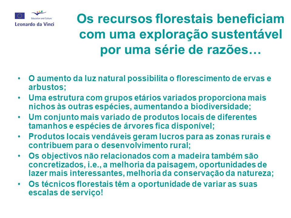 Os recursos florestais beneficiam com uma exploração sustentável por uma série de razões… O aumento da luz natural possibilita o florescimento de erva