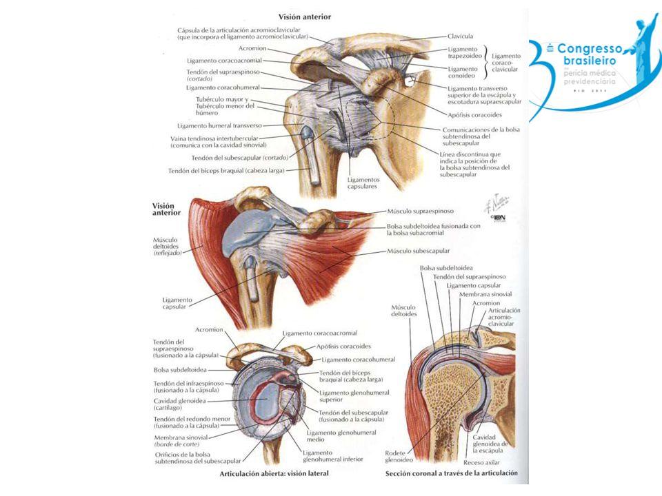 Síndrome do manguito rotador Tendinite do manguito: – Supra-espinhoso é o mais comumente envolvido – Dor a elevação do membro superior – Sem atrofias musculares com fraqueza da musculatura envolvida.