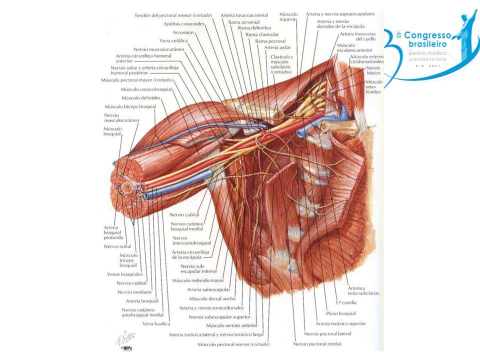 Anamnese Idade Braço dominante Localização da dor Intensidade e duração Ocorrência temporal Fatores agravantes e atenuantes Ocupação Mecanismo da lesão traumática Nível de atividade física
