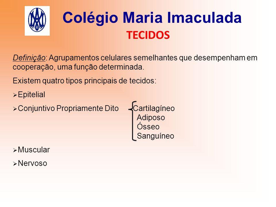Colégio Maria Imaculada TECIDOS 4) Tecido Sanguíneo Células:  glóbulos vermelhos ou hemácias ou eritrócitos (transportam e distribuem O 2 ), possuem o pigmento hemoglobina, são anucleadas quando adultas.