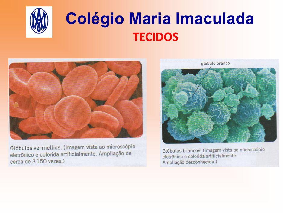 Colégio Maria Imaculada TECIDOS