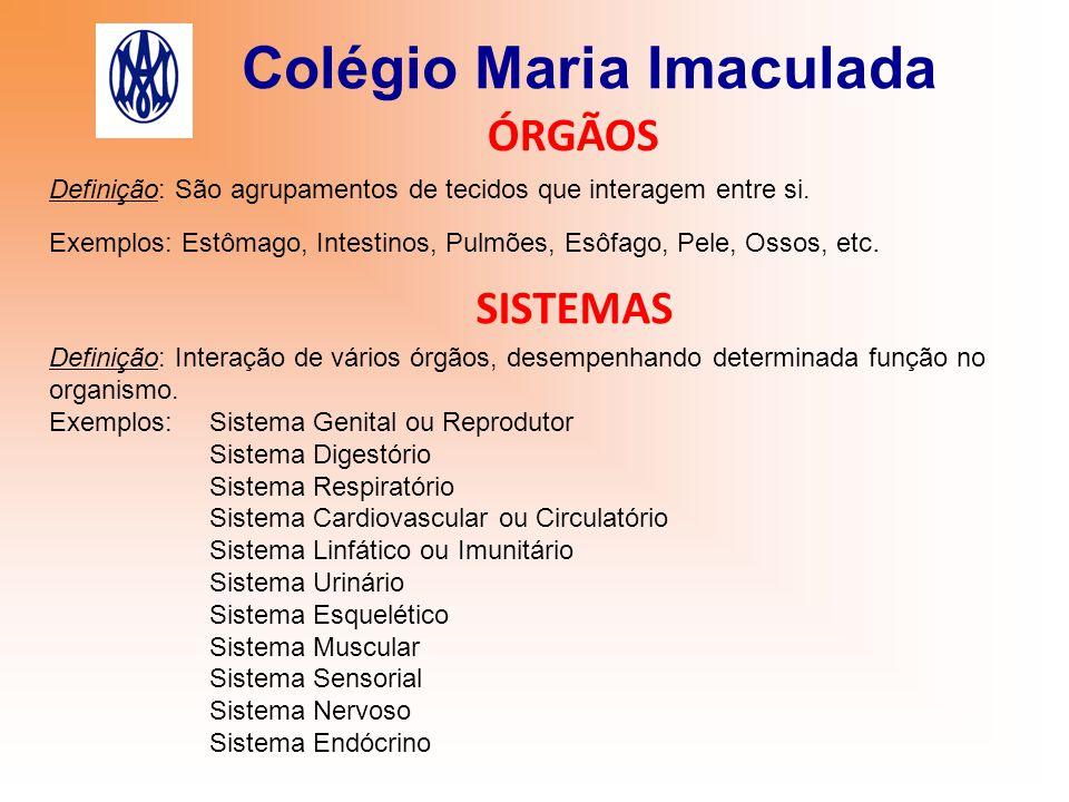 Colégio Maria Imaculada ÓRGÃOS Definição: São agrupamentos de tecidos que interagem entre si. Exemplos: Estômago, Intestinos, Pulmões, Esôfago, Pele,