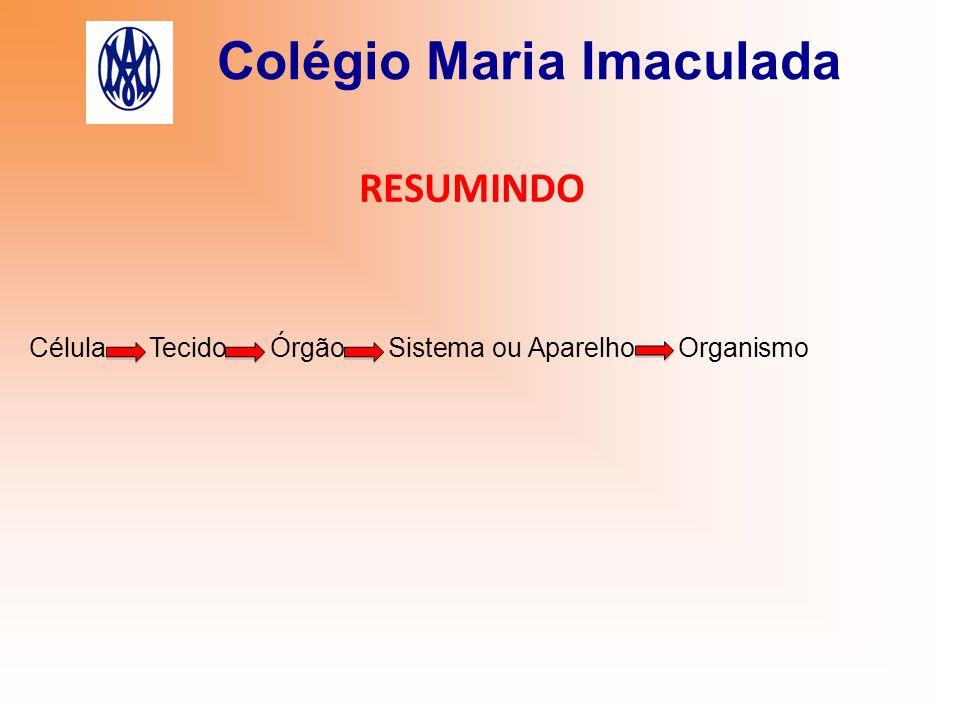 Colégio Maria Imaculada RESUMINDO Célula Tecido Órgão Sistema ou Aparelho Organismo