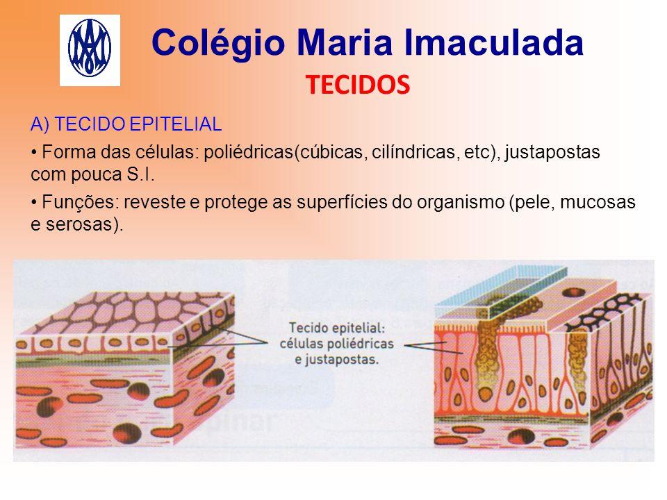 Colégio Maria Imaculada TECIDOS 1) PELE É o maior órgão do corpo.