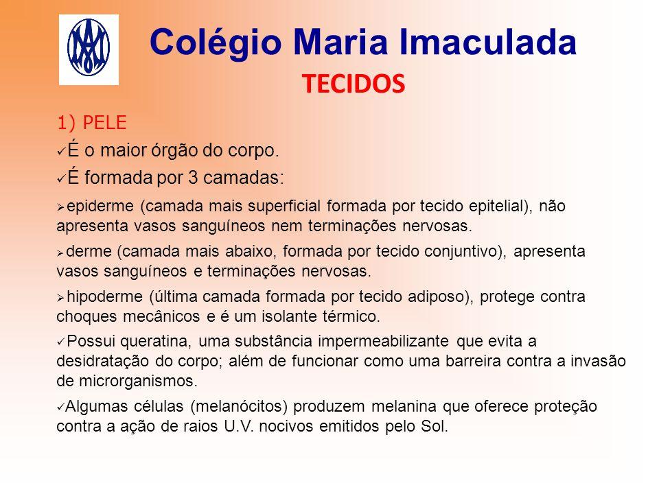 Colégio Maria Imaculada TECIDOS 1) PELE É o maior órgão do corpo. É formada por 3 camadas:  epiderme (camada mais superficial formada por tecido epit