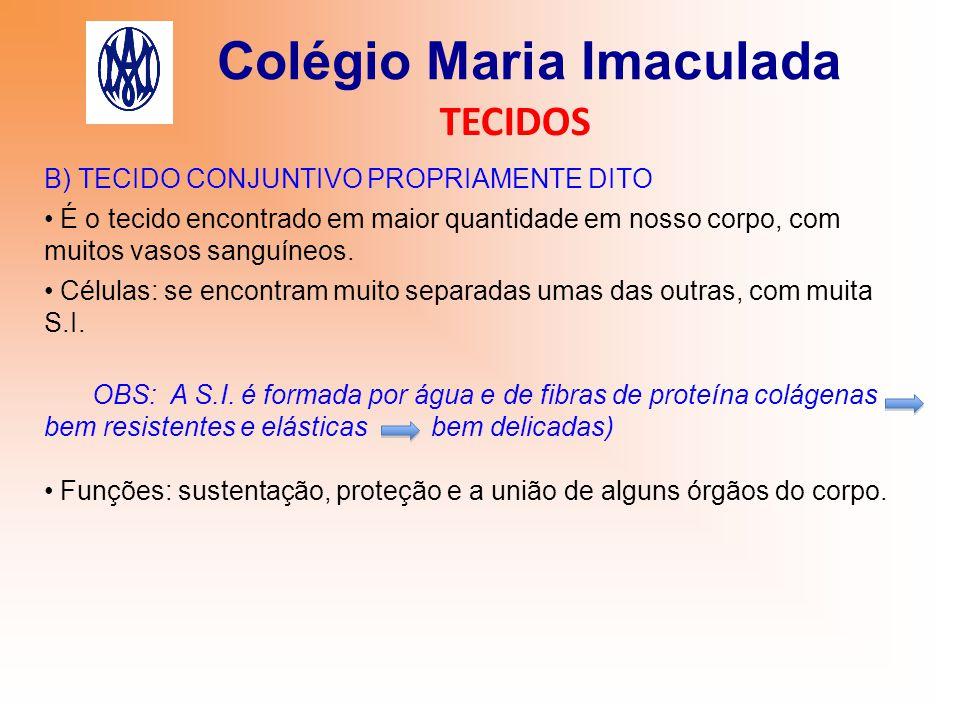 Colégio Maria Imaculada TECIDOS B) TECIDO CONJUNTIVO PROPRIAMENTE DITO É o tecido encontrado em maior quantidade em nosso corpo, com muitos vasos sang