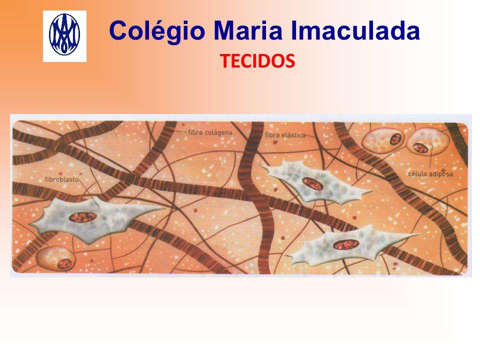 Colégio Maria Imaculada TECIDOS Tipos: 1) Tecido Cartilagíneo Células: condrócitos.