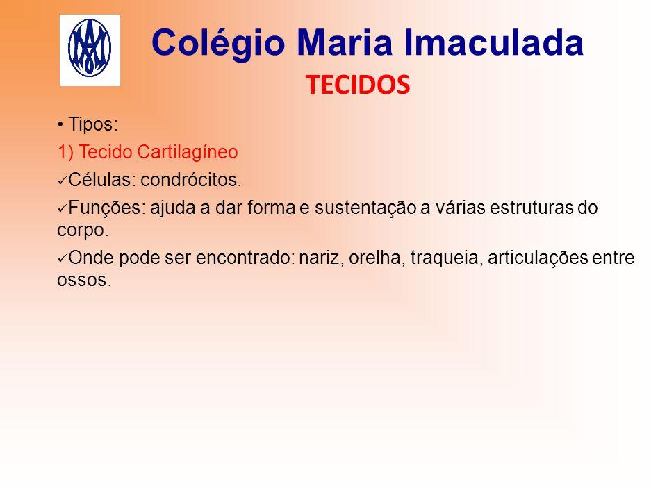 Colégio Maria Imaculada TECIDOS Tipos: 1) Tecido Cartilagíneo Células: condrócitos. Funções: ajuda a dar forma e sustentação a várias estruturas do co