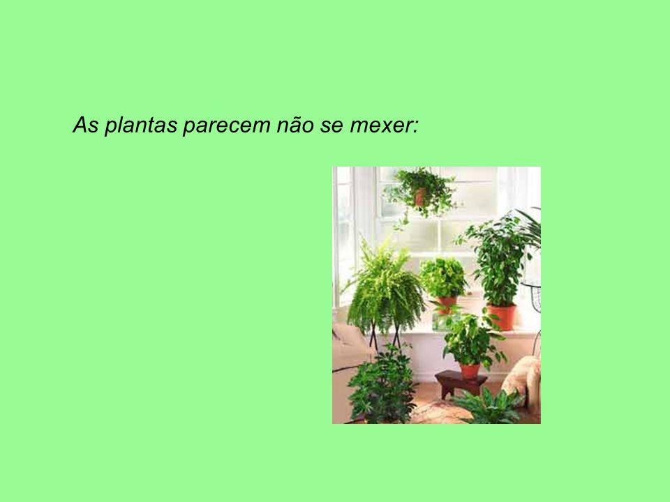 As plantas parecem não se mexer:
