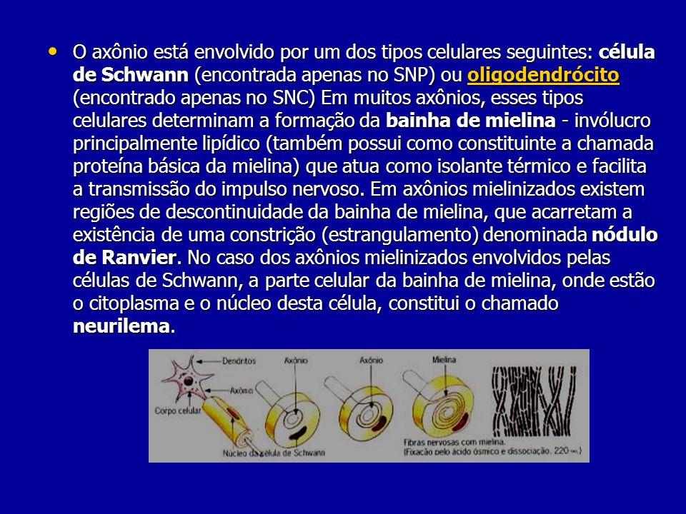 O axônio está envolvido por um dos tipos celulares seguintes: célula de Schwann (encontrada apenas no SNP) ou oligodendrócito (encontrado apenas no SNC) Em muitos axônios, esses tipos celulares determinam a formação da bainha de mielina - invólucro principalmente lipídico (também possui como constituinte a chamada proteína básica da mielina) que atua como isolante térmico e facilita a transmissão do impulso nervoso.