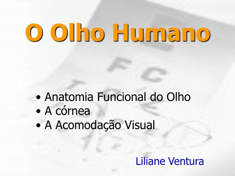 O Olho Humano Anatomia Funcional do Olho A córnea A Acomodação Visual Liliane Ventura