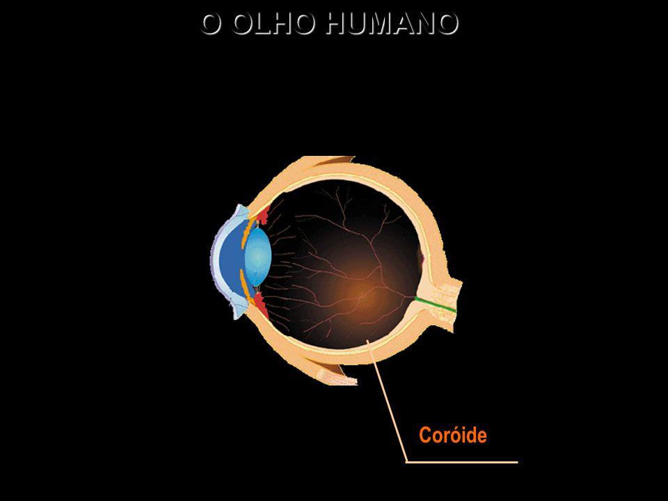 O OLHO HUMANO Coróide