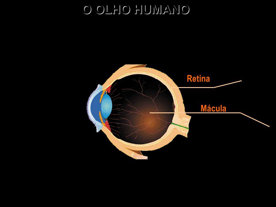 O OLHO HUMANO Mácula Retina
