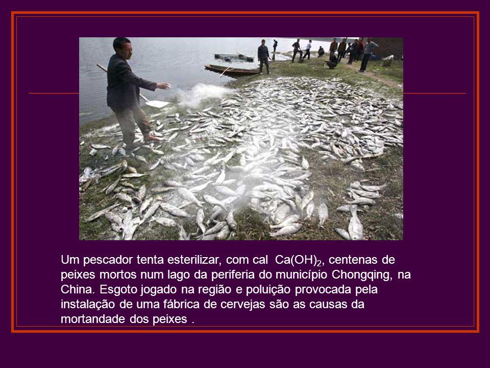 Um pescador tenta esterilizar, com cal Ca(OH) 2, centenas de peixes mortos num lago da periferia do município Chongqing, na China. Esgoto jogado na re
