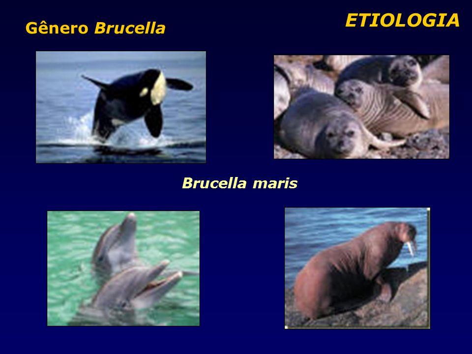 Brucella maris ETIOLOGIA ETIOLOGIA Gênero Brucella