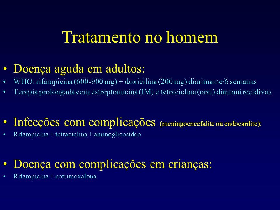 Tratamento no homem Doença aguda em adultos: WHO: rifampicina (600-900 mg) + doxicilina (200 mg) diarimante/6 semanas Terapia prolongada com estreptomicina (IM) e tetraciclina (oral) diminui recidivas Infecções com complicações (meningoencefalite ou endocardite): Rifampicina + tetraciclina + aminoglicosídeo Doença com complicações em crianças: Rifampicina + cotrimoxalona