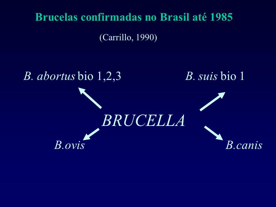 Brucelas confirmadas no Brasil até 1985 (Carrillo, 1990) B. abortus bio 1,2,3 B. suis bio 1 BRUCELLA B.ovis B.canis