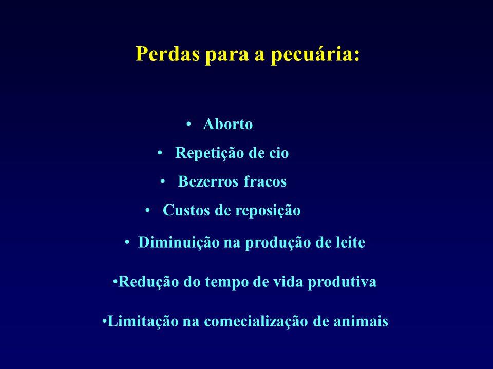 Aborto Diminuição na produção de leite Redução do tempo de vida produtiva Limitação na comecialização de animais Custos de reposição Bezerros fracos Repetição de cio Perdas para a pecuária: