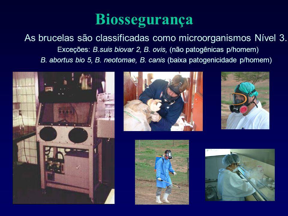 Biossegurança As brucelas são classificadas como microorganismos Nível 3. Exceções: B.suis biovar 2, B. ovis, (não patogênicas p/homem) B. abortus bio