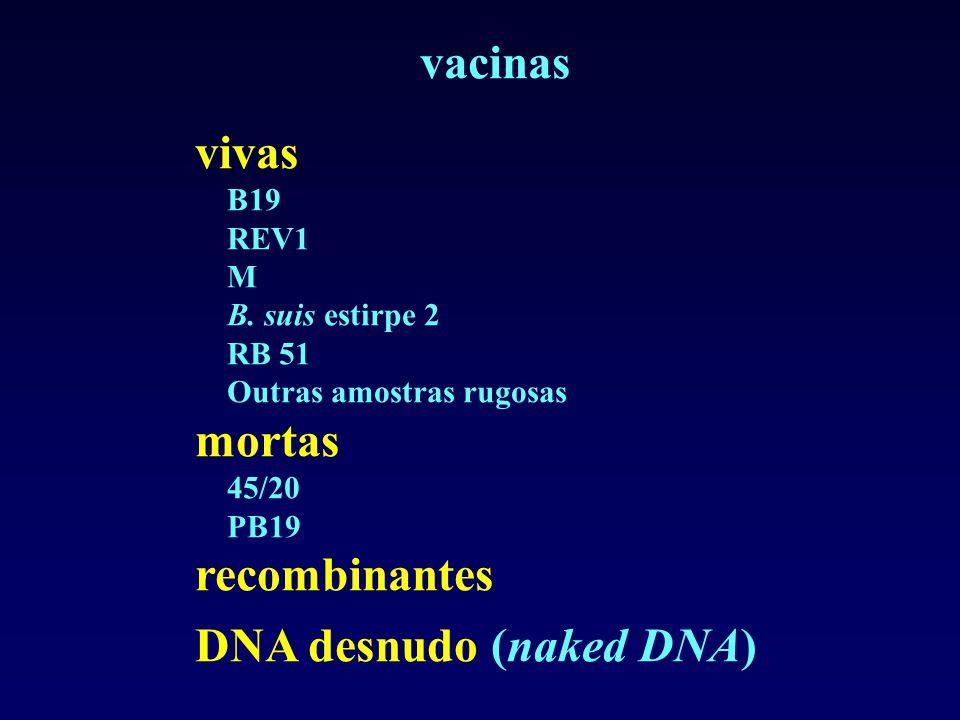 vacinas vivas B19 REV1 M B. suis estirpe 2 RB 51 Outras amostras rugosas mortas 45/20 PB19 recombinantes DNA desnudo (naked DNA)