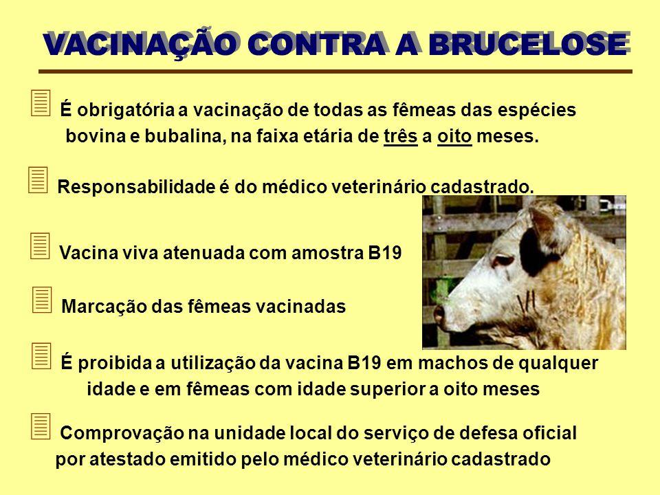  É obrigatória a vacinação de todas as fêmeas das espécies bovina e bubalina, na faixa etária de três a oito meses.  É proibida a utilização da vaci