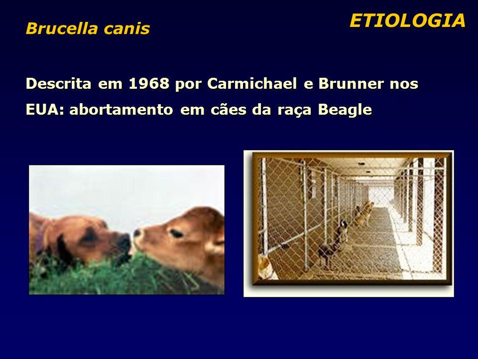 ETIOLOGIA ETIOLOGIA Brucella canis Descrita em 1968 por Carmichael e Brunner nos EUA: abortamento em cães da raça Beagle