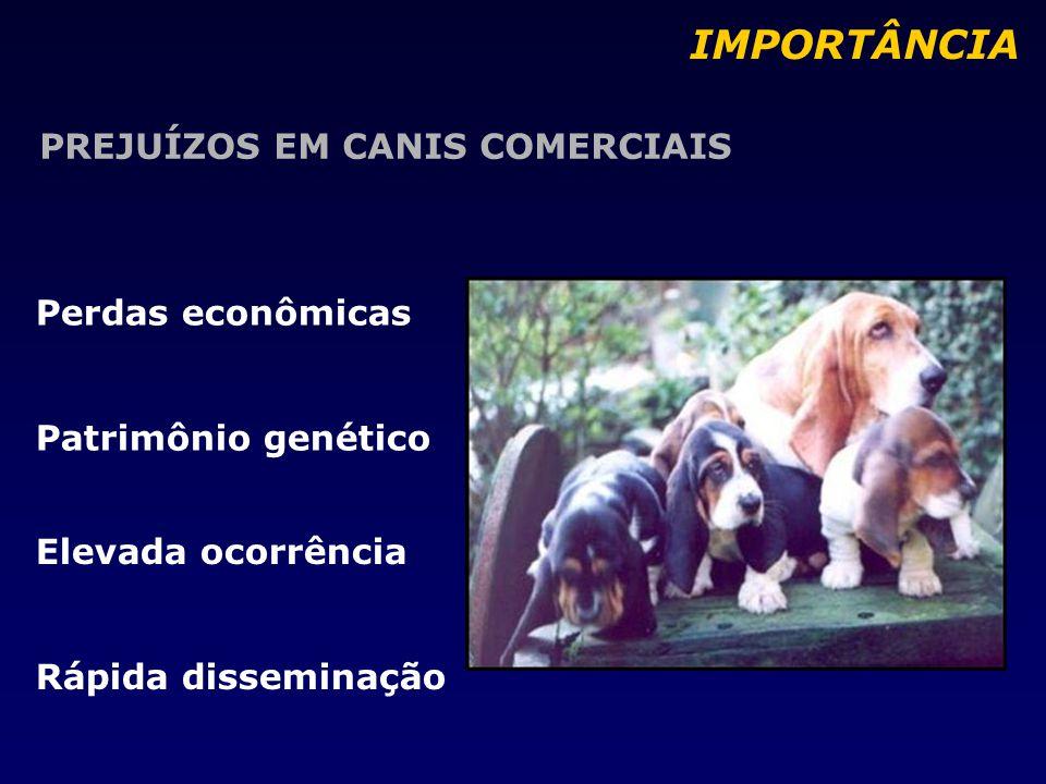 PREJUÍZOS EM CANIS COMERCIAIS Perdas econômicas Patrimônio genético IMPORTÂNCIA Elevada ocorrência Rápida disseminação