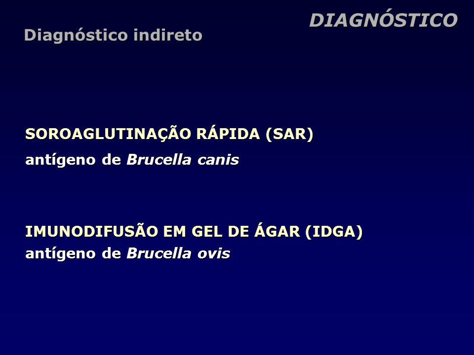 SOROAGLUTINAÇÃO RÁPIDA (SAR) antígeno de Brucella canis DIAGNÓSTICO Diagnóstico indireto IMUNODIFUSÃO EM GEL DE ÁGAR (IDGA) antígeno de Brucella ovis