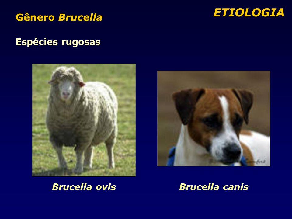 Espécies rugosas Brucella ovisBrucella canis ETIOLOGIA ETIOLOGIA Gênero Brucella