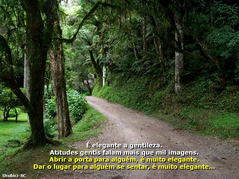 Não há livro que ensine alguém a ter uma visão generosa do mundo, a estar nele de uma forma não arrogante… Morro de São Paulo-BA