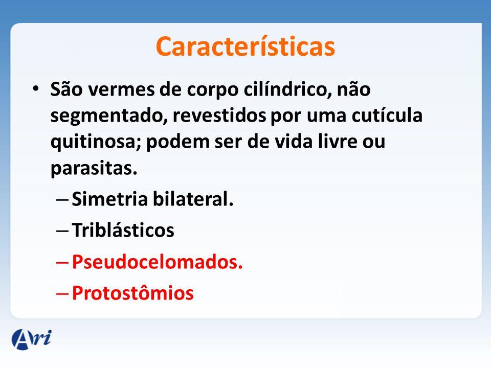 Ganglionar. Dois cordões nervosos periesofágicos com gânglios principais na porção anterior.