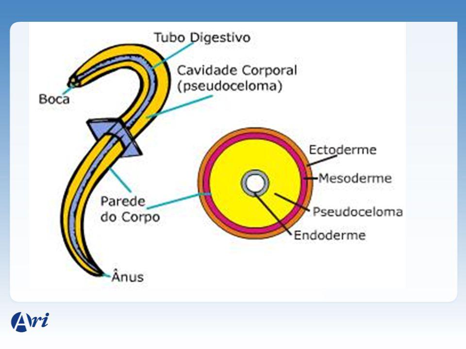 camada única de células com cutícula Película protetora rica em fibras colágenas secretadas pela própria epiderme Proteção contra o atrito no solo, contra enzimas digestivas.