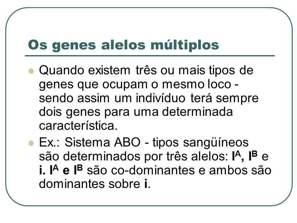 Os genes alelos múltiplos Quando existem três ou mais tipos de genes que ocupam o mesmo loco - sendo assim um indivíduo terá sempre dois genes para um