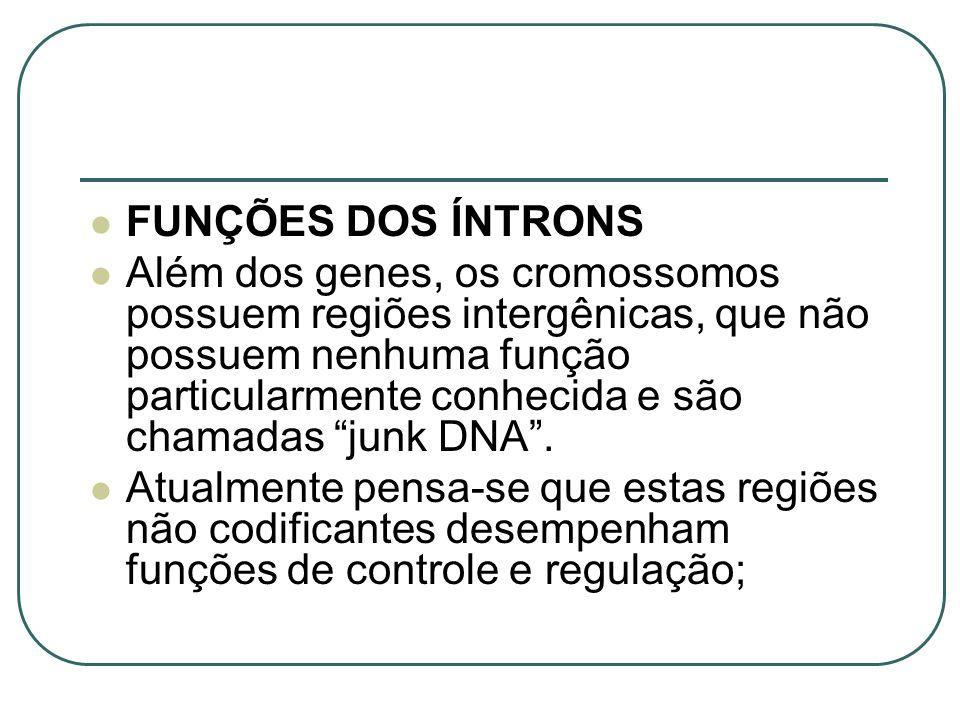 FUNÇÕES DOS ÍNTRONS Além dos genes, os cromossomos possuem regiões intergênicas, que não possuem nenhuma função particularmente conhecida e são chamad