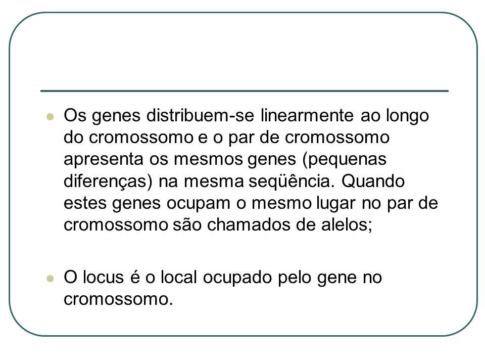 Os genes distribuem-se linearmente ao longo do cromossomo e o par de cromossomo apresenta os mesmos genes (pequenas diferenças) na mesma seqüência. Qu