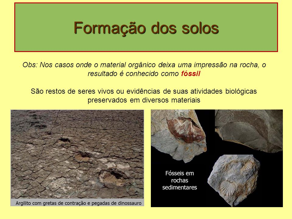 Formação dos solos Obs: Nos casos onde o material orgânico deixa uma impressão na rocha, o resultado é conhecido como fóssil São restos de seres vivos ou evidências de suas atividades biológicas preservados em diversos materiais