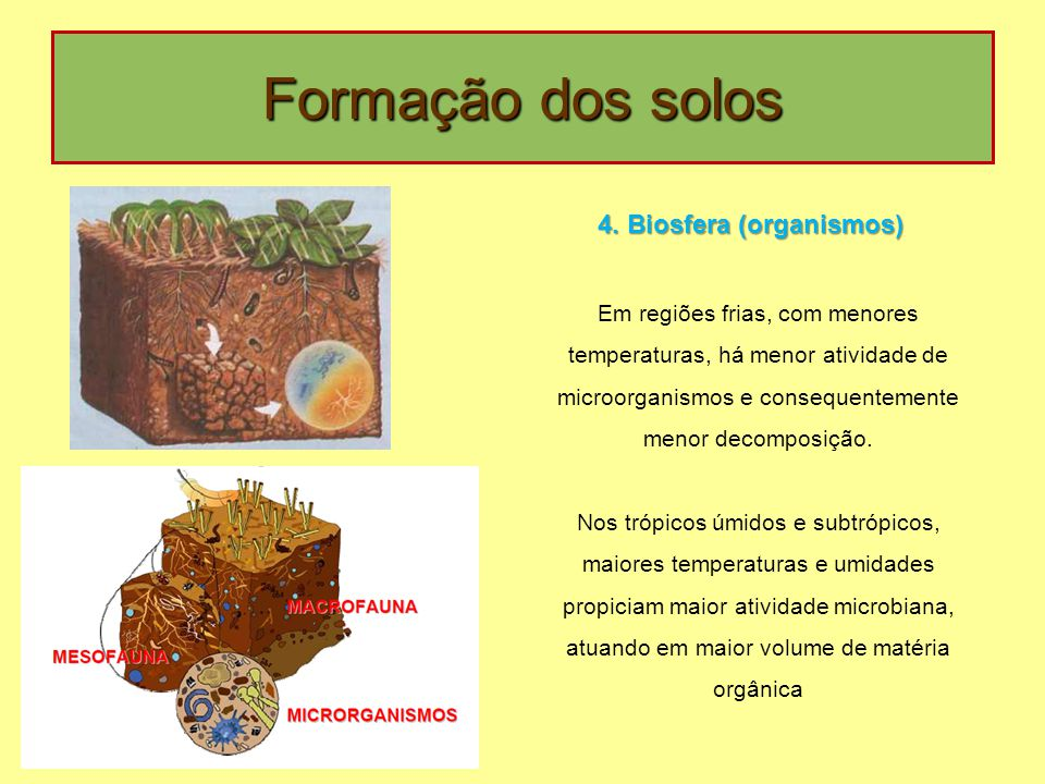 Formação dos solos Em regiões frias, com menores temperaturas, há menor atividade de microorganismos e consequentemente menor decomposição. Nos trópic