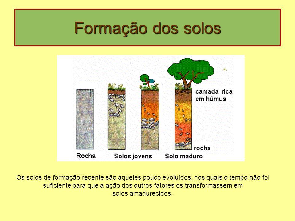 Formação dos solos Os solos de formação recente são aqueles pouco evoluídos, nos quais o tempo não foi suficiente para que a ação dos outros fatores os transformassem em solos amadurecidos.