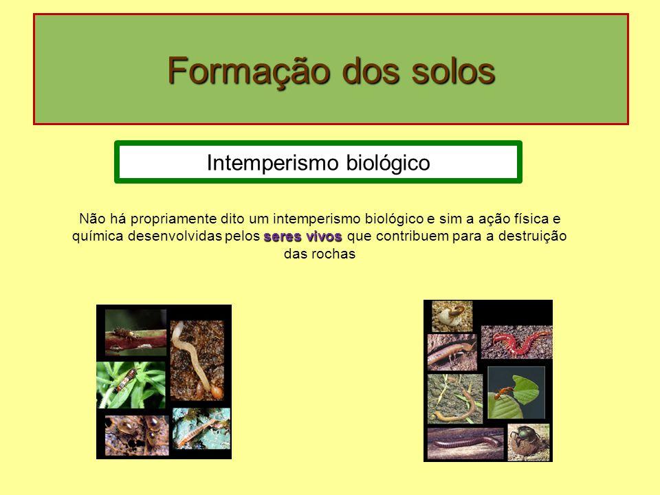 Formação dos solos Intemperismo biológico seres vivos Não há propriamente dito um intemperismo biológico e sim a ação física e química desenvolvidas pelos seres vivos que contribuem para a destruição das rochas