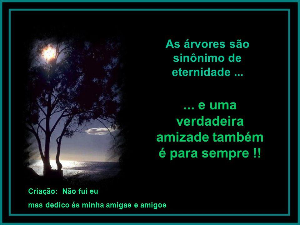 A árvore é sombra protetora, como os amigos; sombra que varia com o dia, que avança e faz variados rendados de luz semelhantes à estrelas...