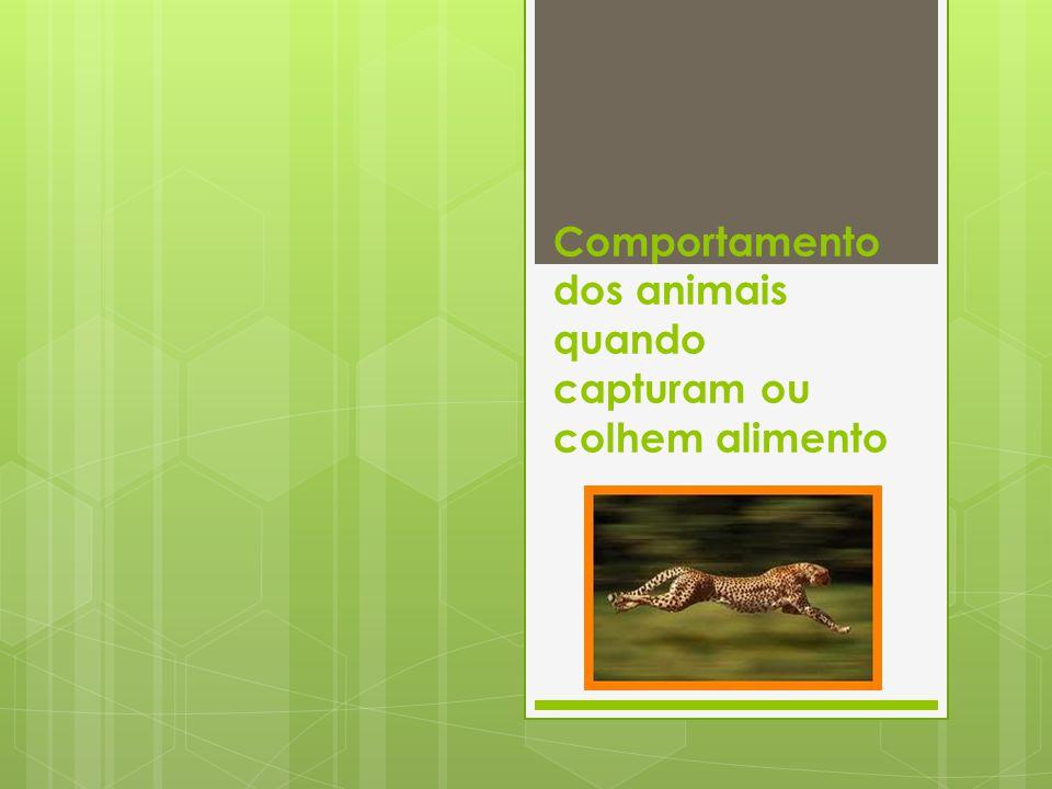 Qual é o comportamento alimentar dos animais.