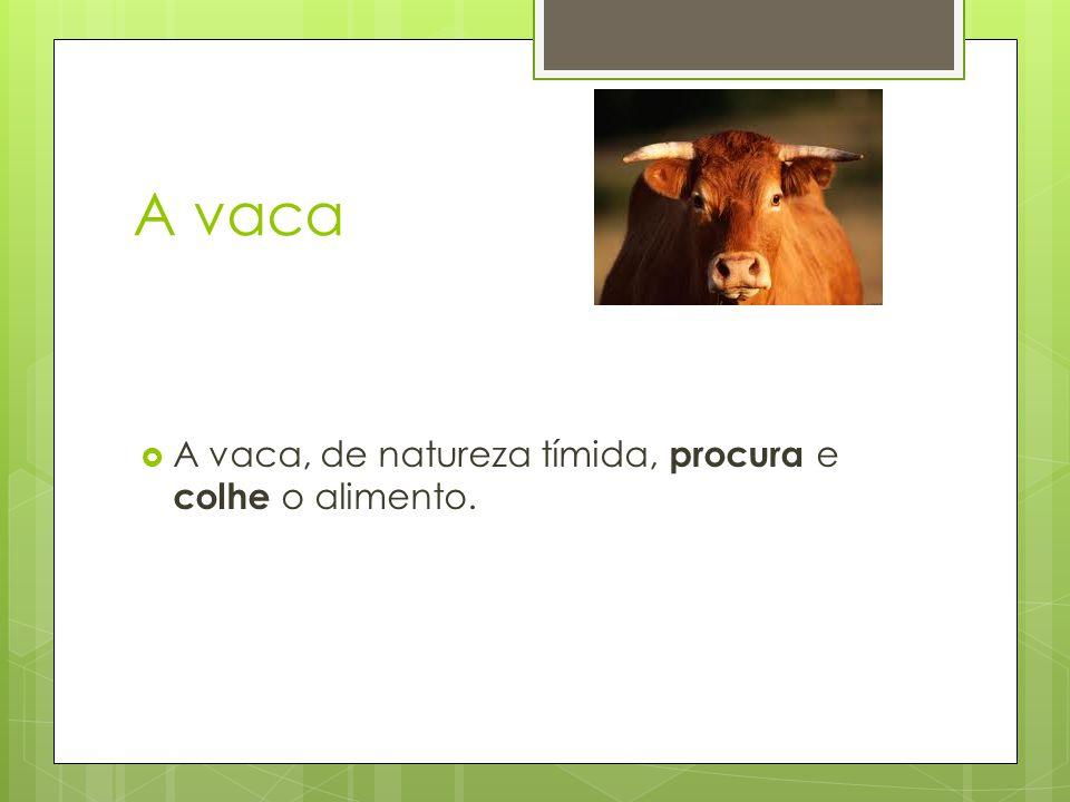 A vaca  A vaca, de natureza tímida, procura e colhe o alimento.