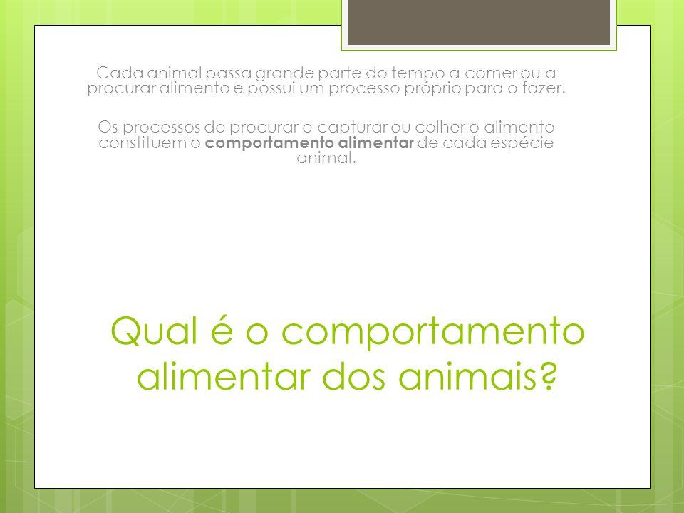 Qual é o comportamento alimentar dos animais? Cada animal passa grande parte do tempo a comer ou a procurar alimento e possui um processo próprio para