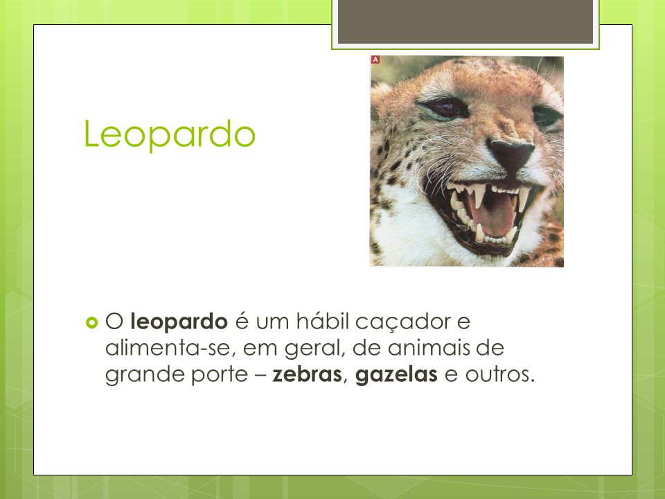 Leopardo  O leopardo é um hábil caçador e alimenta-se, em geral, de animais de grande porte – zebras, gazelas e outros.