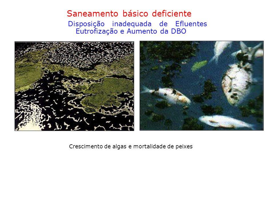 Saneamento básico deficiente Disposição inadequada de Efluentes Eutrofização e Aumento da DBO Crescimento de algas e mortalidade de peixes